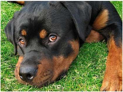 אילוף כלבים מקצועי,דנה זיו