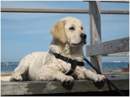 אילוף כלבים מקצועי,קרן וולף